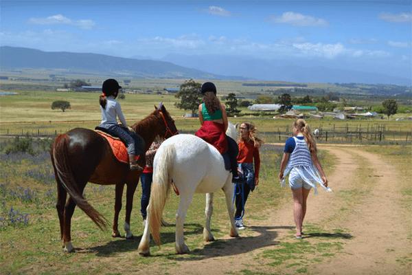 Horse & Pony Rides